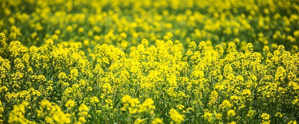 łąki kwiatowe